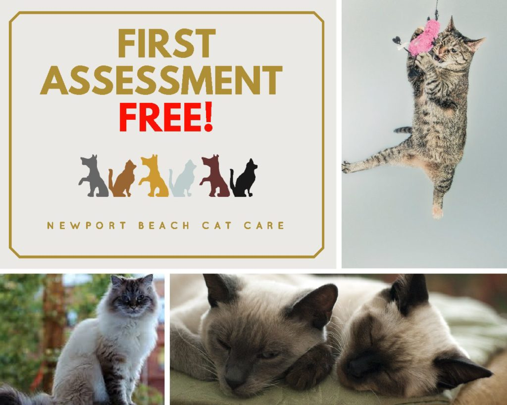 Newport Beach Cat care offers professional pet sitting services